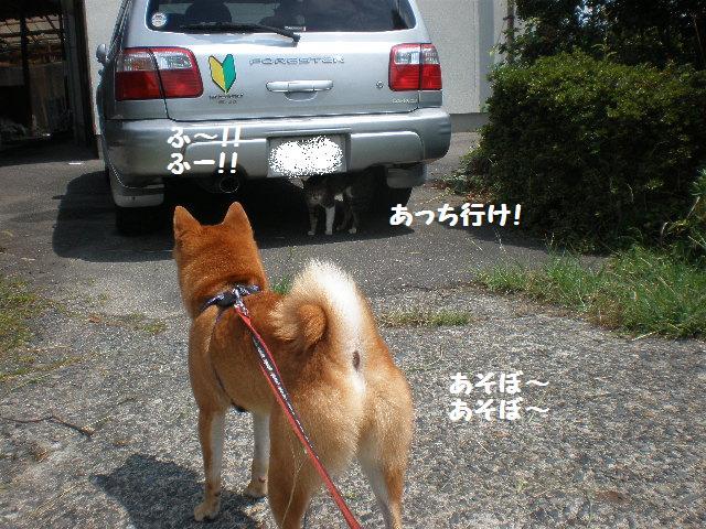 にゃんちゃん