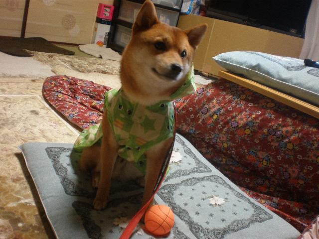 カッパ犬2