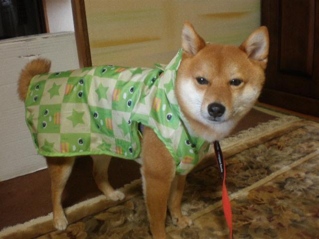 カッパ犬4