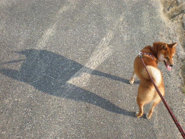 影だいちゃん