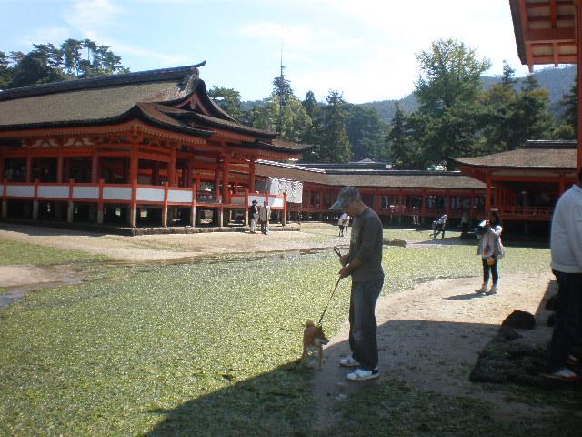 神社の下2