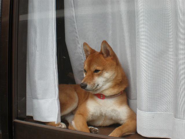出窓でのんびり~