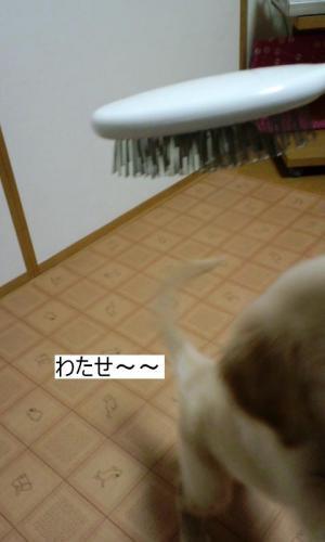 PAP_00001_convert_20091022232453.jpg