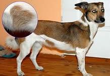 奇跡の愛犬!