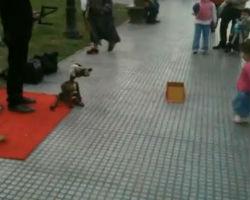Dog Puppeteer in Recoleta