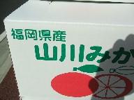 みかん-箱