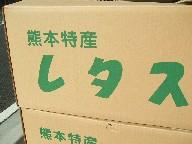 レタス-箱