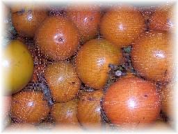 丸柿ネット