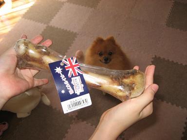 オーストラリアの羊さんの骨っこです。