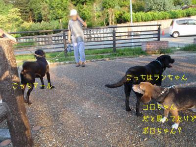b2_P8170132.jpg