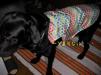 b_2009-07-11_SANY0003.jpg