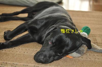 b_20090916DSC_0036.jpg