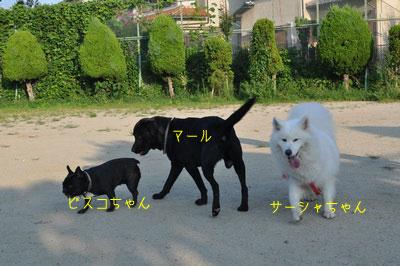 b_DSC_0037.jpg