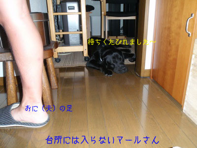 b_P8020027.jpg