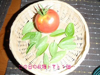 b_P8100056.jpg