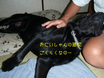 b_P8140009.jpg