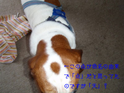 b_P8160052.jpg