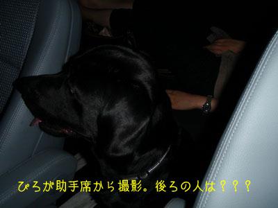 b_P8180170.jpg