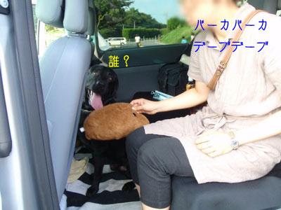b_P8180177.jpg