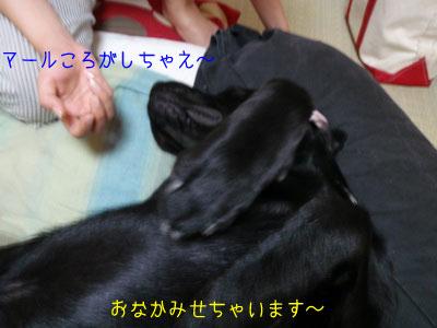 b_P8200002.jpg