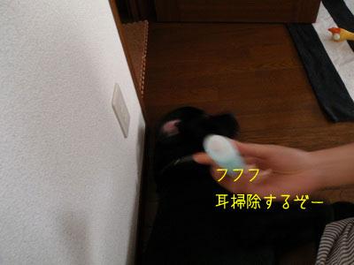 b_P8200005.jpg