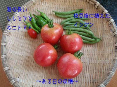 b_P8230007.jpg