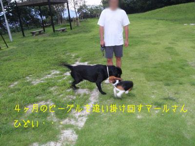 b_P8230032.jpg