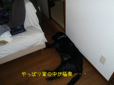 b_P8260035.jpg