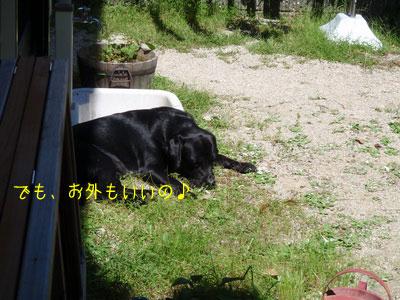 b_P8260037.jpg