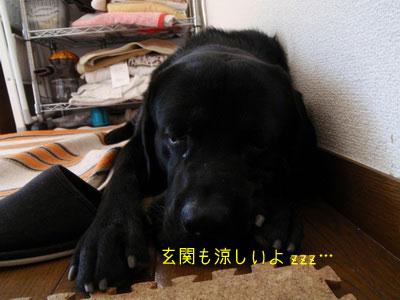 b_P8260039.jpg