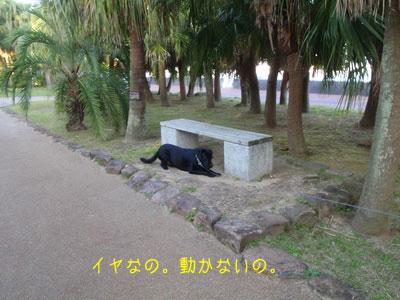 b_P9210292.jpg