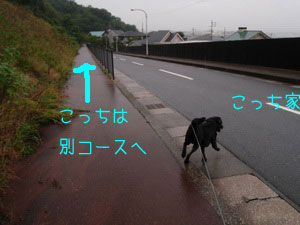 b_P9300027.jpg