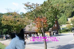 白川郷_001s