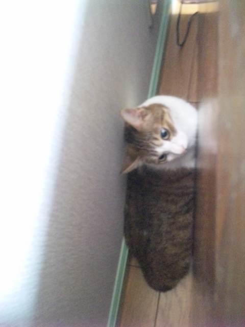 2011912misya2.jpg