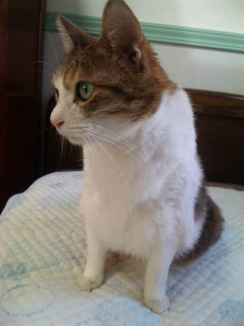 2011912misya3.jpg
