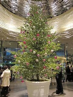 イトシア_クリスマスツリー