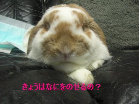1117_20091117214045.jpg