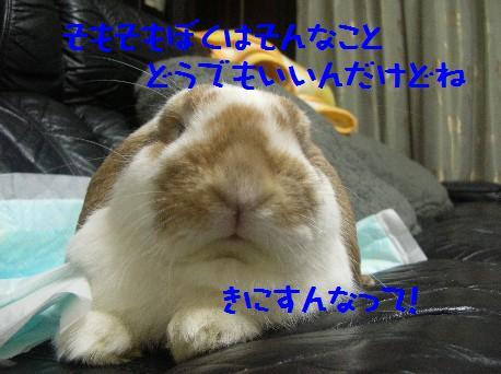 maroburo 071