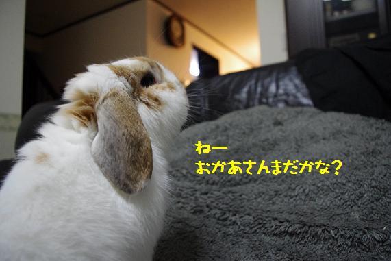 じぇらしー1