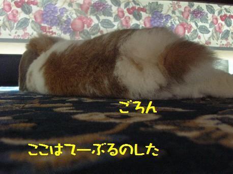 DSCN2382.jpg