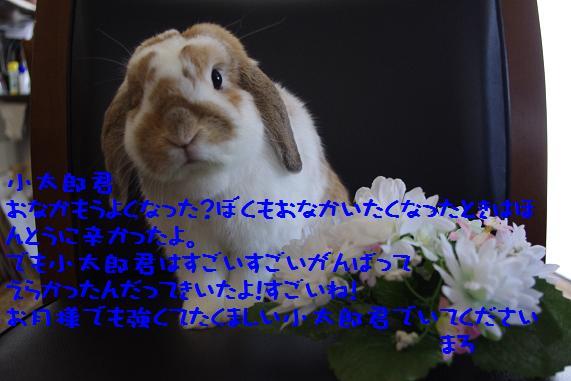 IMGP2264.jpg