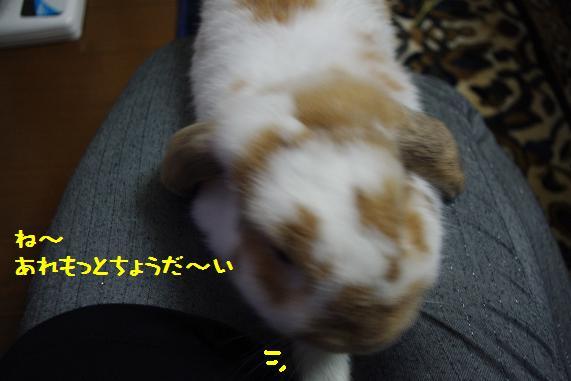 IMGP2480.jpg