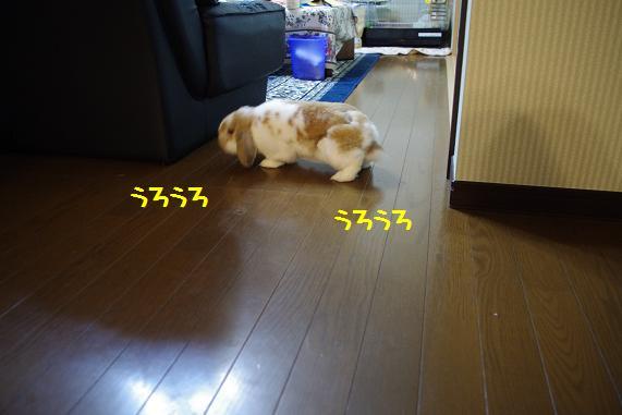 IMGP2649.jpg