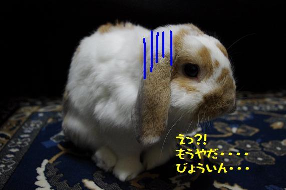 IMGP2881.jpg