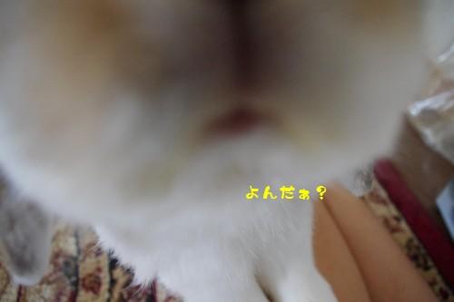 IMGP9415.jpg