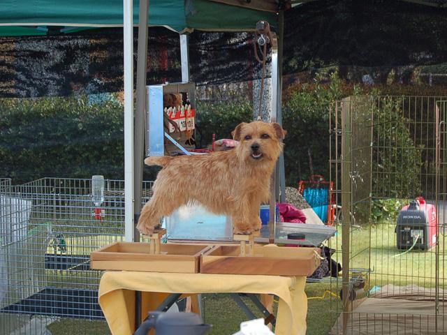 dogshow1.jpg