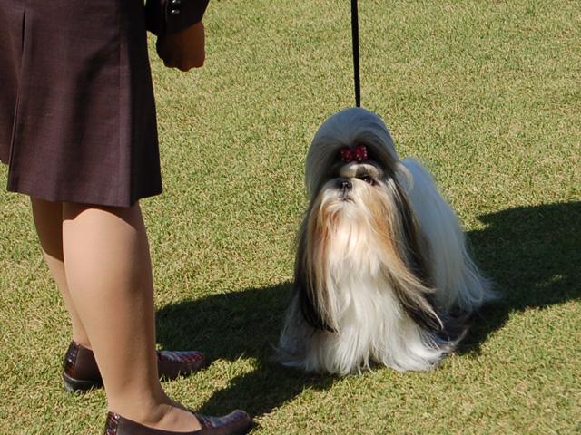 dogshow21.jpg