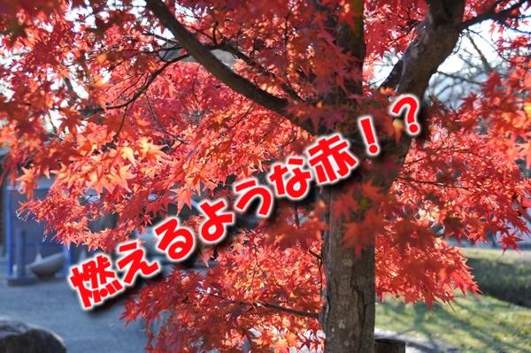 10_Rr001.jpg