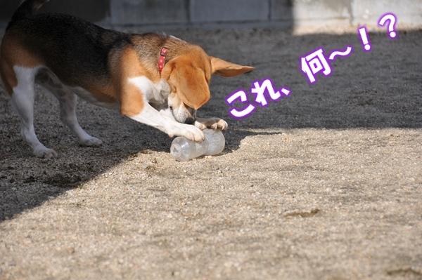11_Rr008.jpg