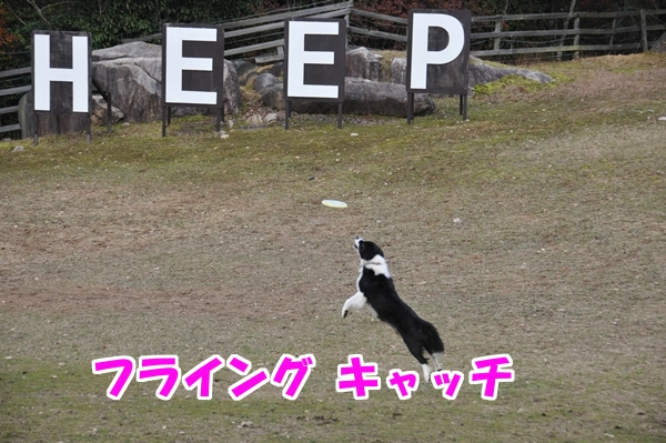 9_Rr006.jpg